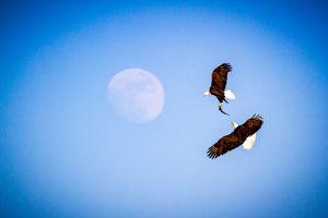 c81-EagleFlight_s.jpg